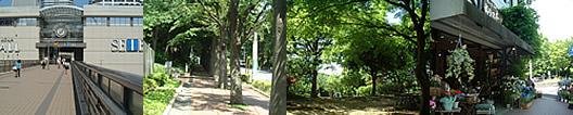 アロマテラピー教室「Natural Herb ナチュラルハーブ」アロマテラピー検定対策の専門サイト。東戸塚駅から教室周辺の画像です。東戸塚は緑の多いキレイな町並みです。駅前の西武百貨店とオーロラモール〜教室までのケヤキ並木〜帰り道の途中にある公園〜かわいいお花屋さん